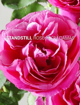 Rose from Damas plant cells provide anti-wrinkle effect