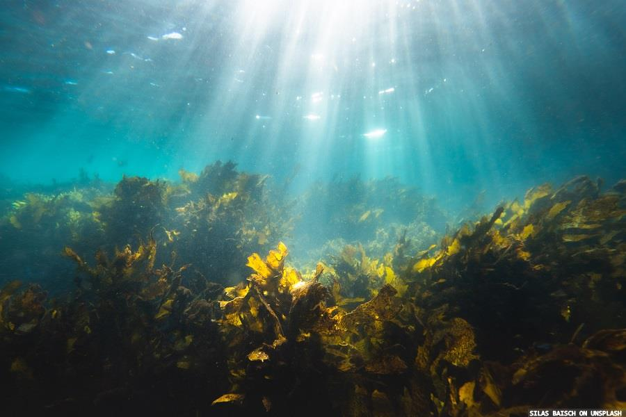 Study shows dermatitis benefits from seaweed extracts